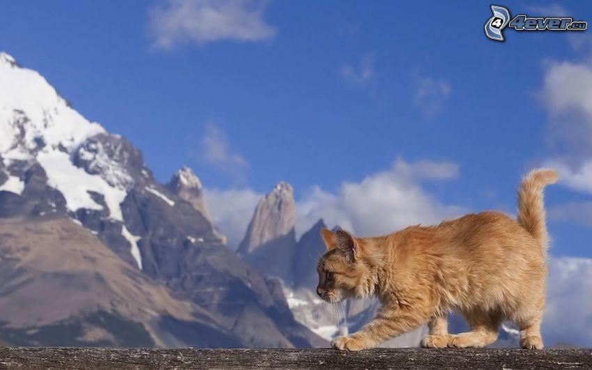 gatto, gatto rosso, montagne innevate