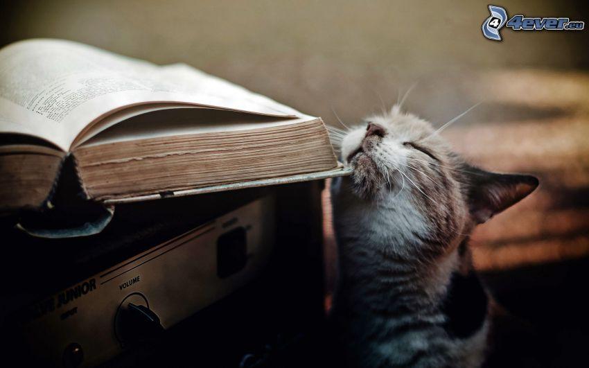 gatto, libro