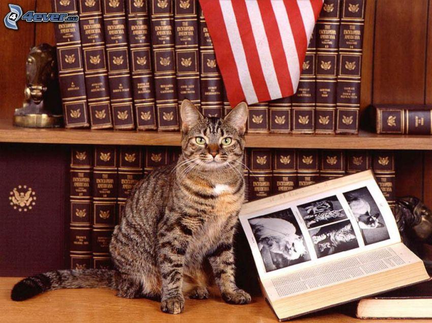 gatto, micio, libro, biblioteca
