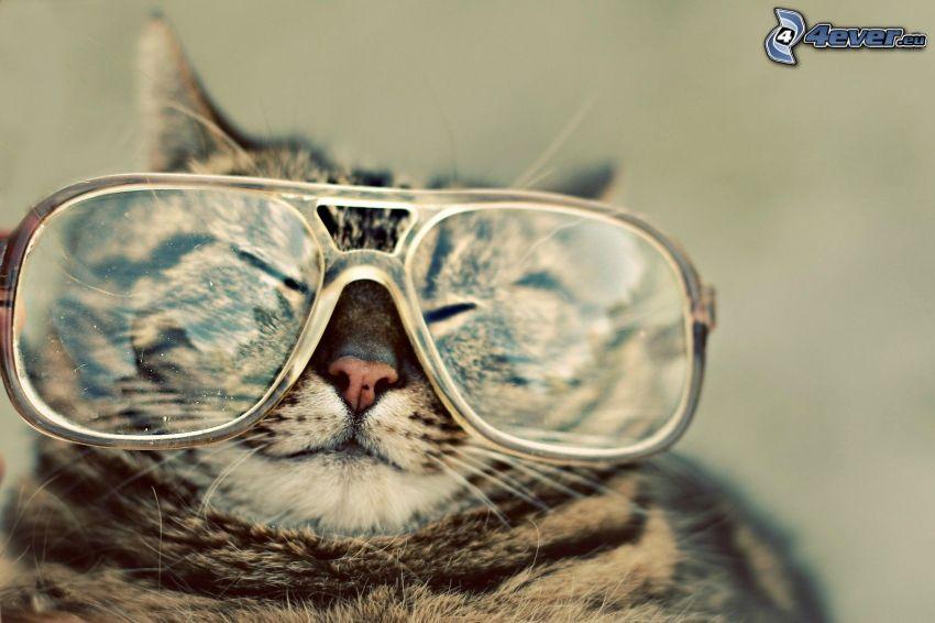 gatto, occhiali