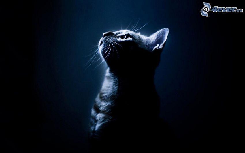 gatto, oscurità