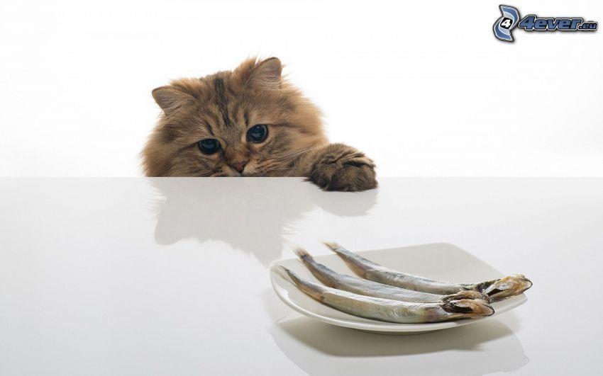 gatto, pesci, piatto, tavolo