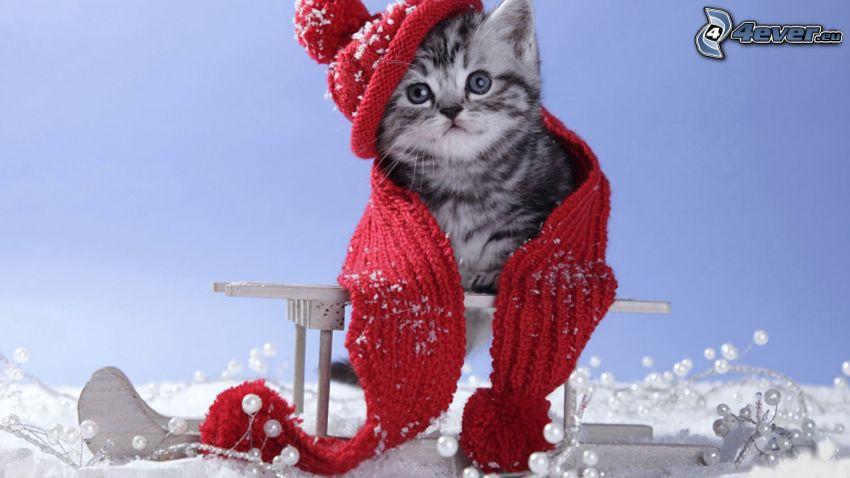 gatto, sciarpa, berretto, inverno