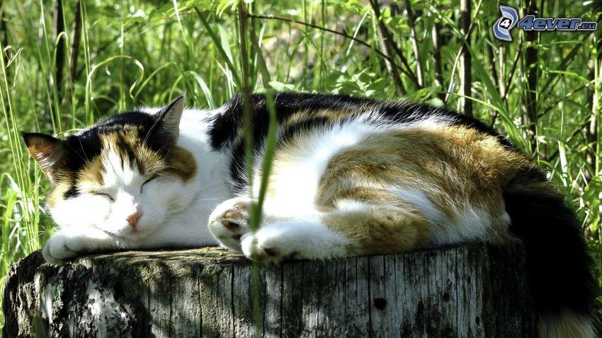 gatto, sonno