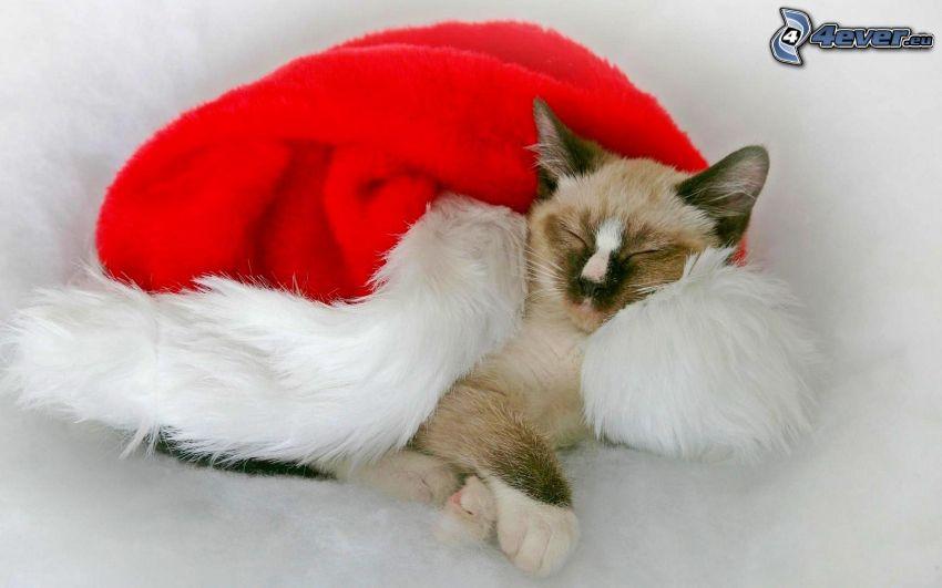 gatto addormentato, cappello di babbo natale