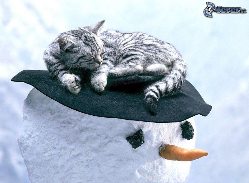 gatto addormentato, pupazzo di neve, cappello