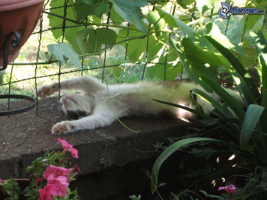 gatto addormentato, recinto, fiori rossi, foglie verdi