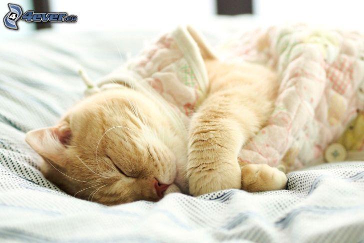 gatto addormentato