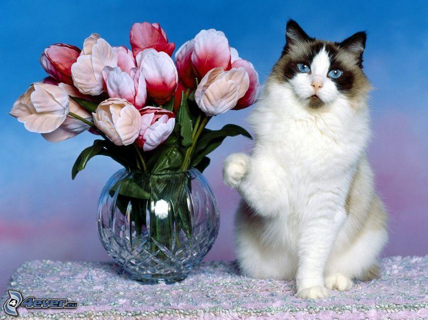gatto bianco-nero, bouquet, tulipani