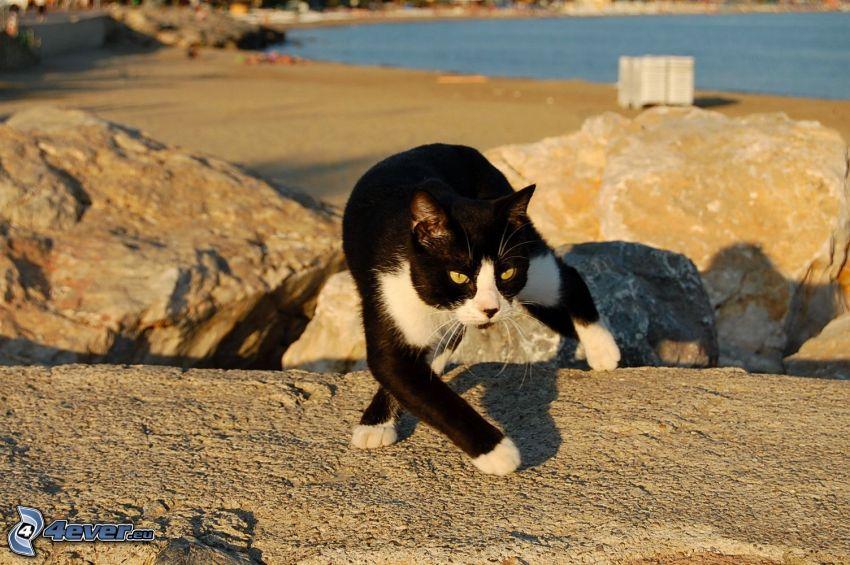 gatto bianco-nero, rocce