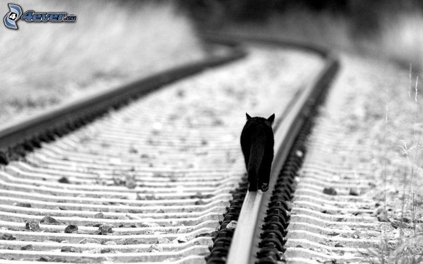 gatto nero, rotaia vignoles