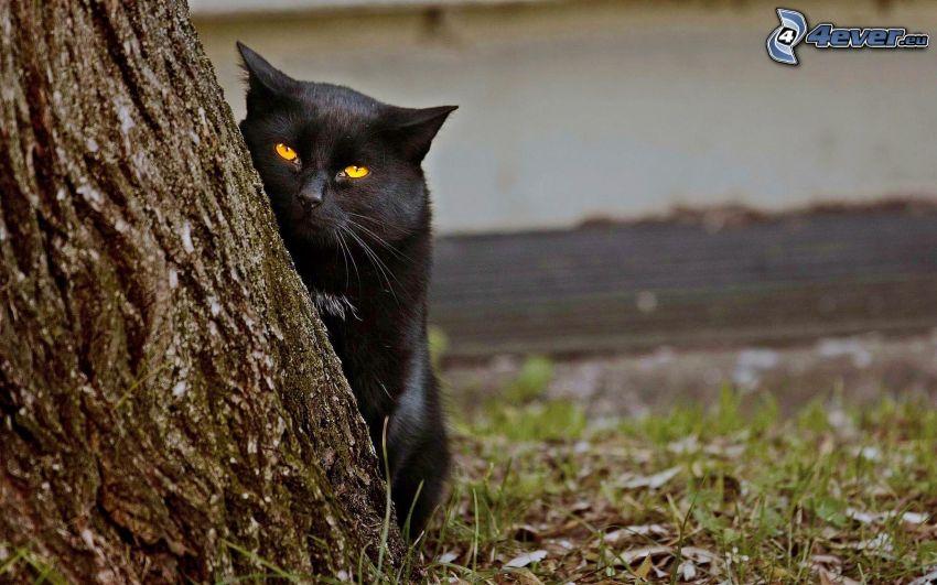 gatto nero, tronco
