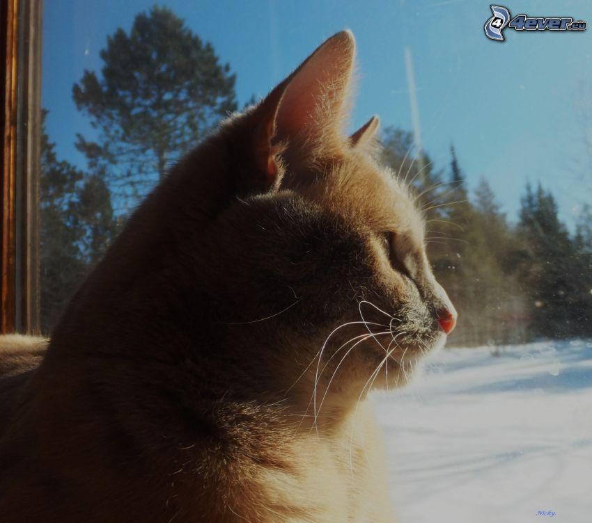 gatto rosso, gatto alla finestra