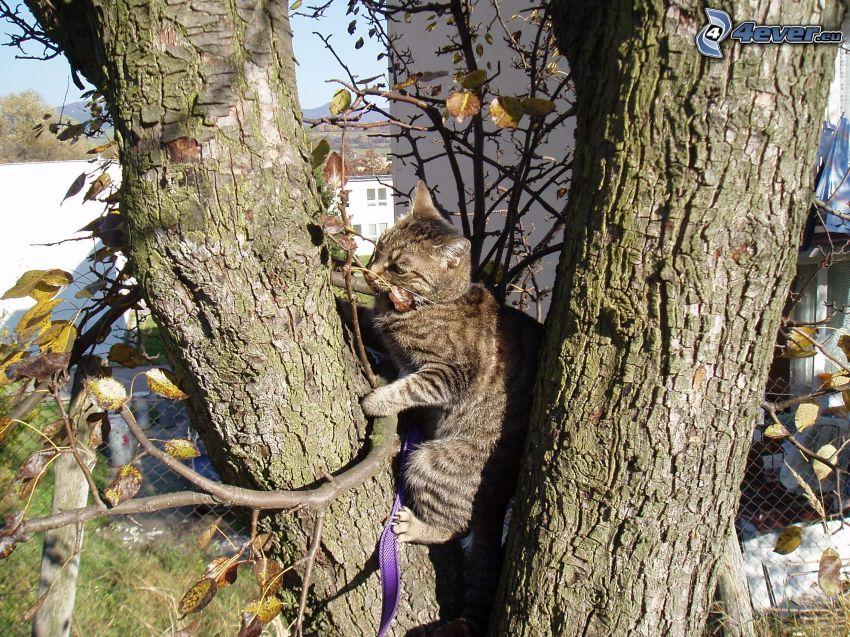 gatto su un albero, nastro
