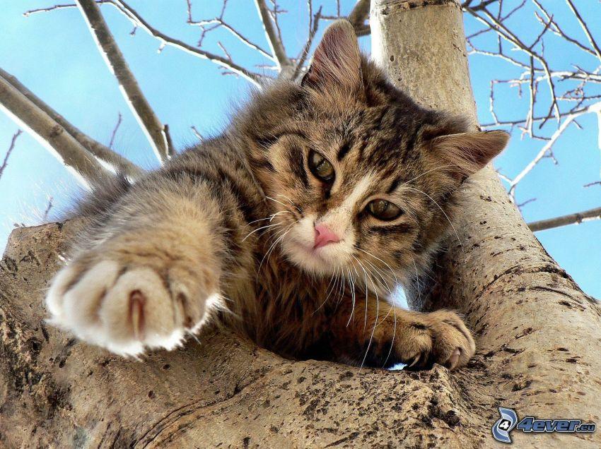 gatto su un ramo, zampa