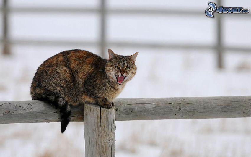 gatto sulla rete fissa, palizzata