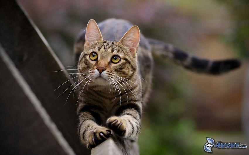 gatto sulla rete fissa, sguardo di gatta