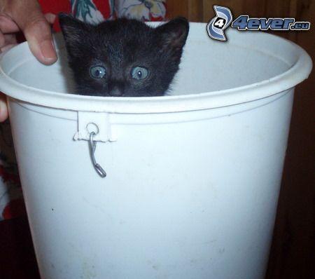 un piccolo gatto nero, micio, secchio
