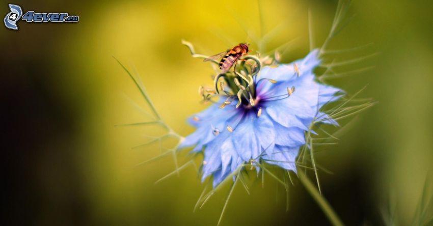 Ape sul fiore, fiore azzurro