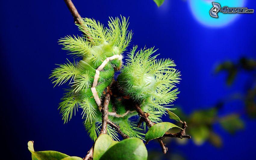 bruco verde, ramoscello