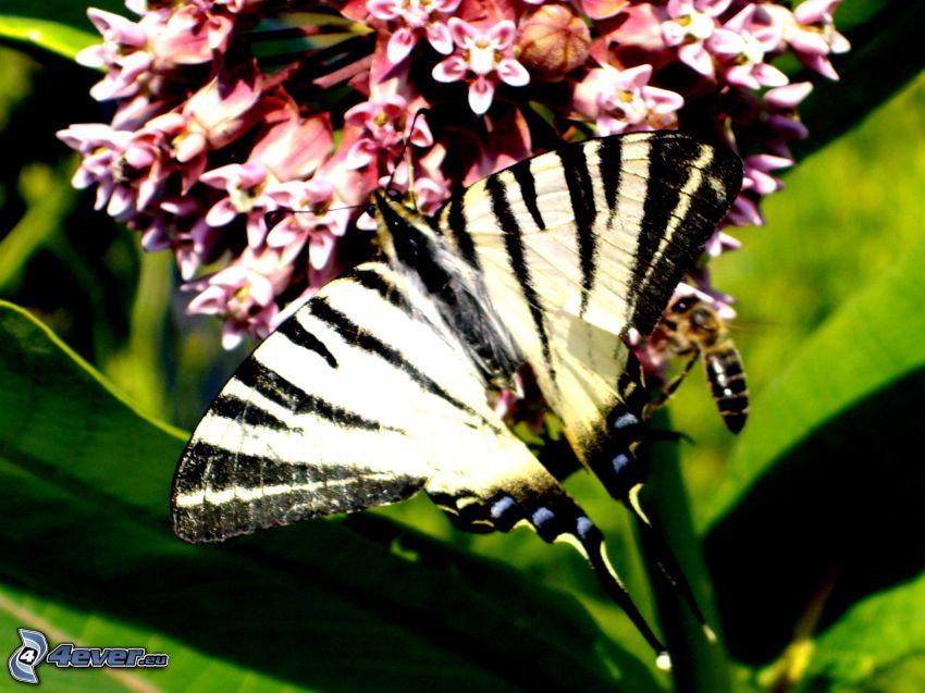 farfalla, fiori, ape