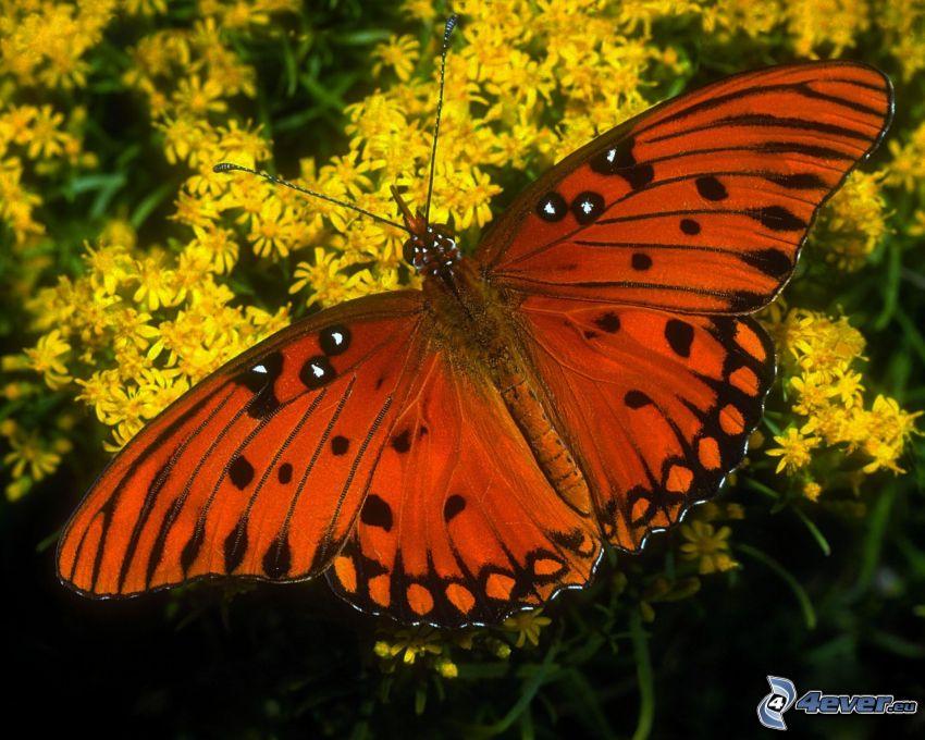 farfalla, fiori gialli