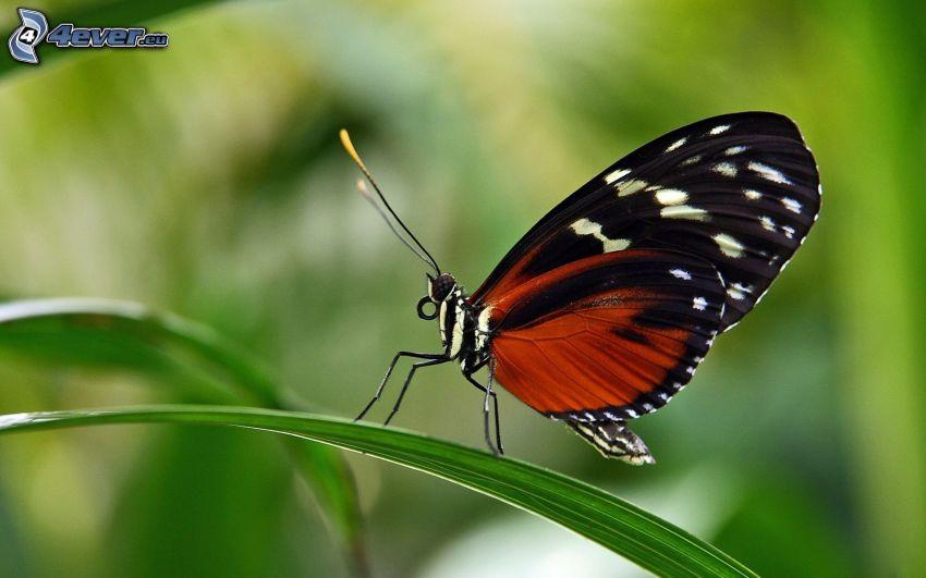 farfalla, foglie