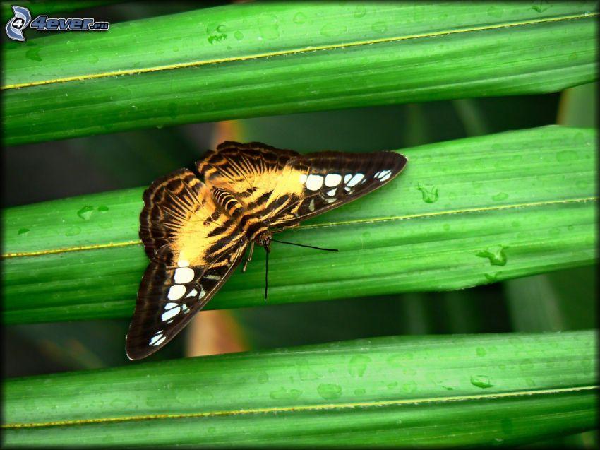 farfalla, foglie verdi