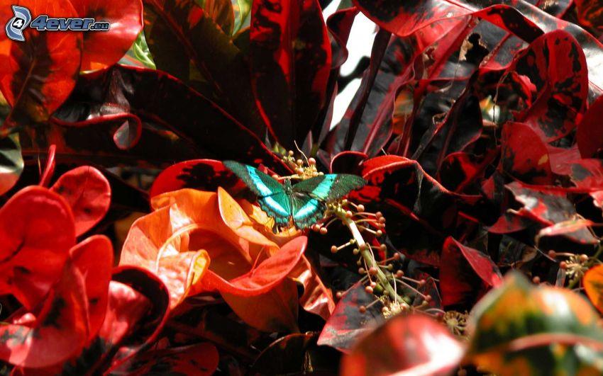 farfalla blu, piante