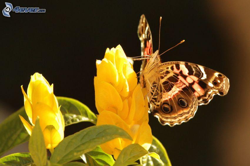 farfalla sul fiore, fiore giallo, macro