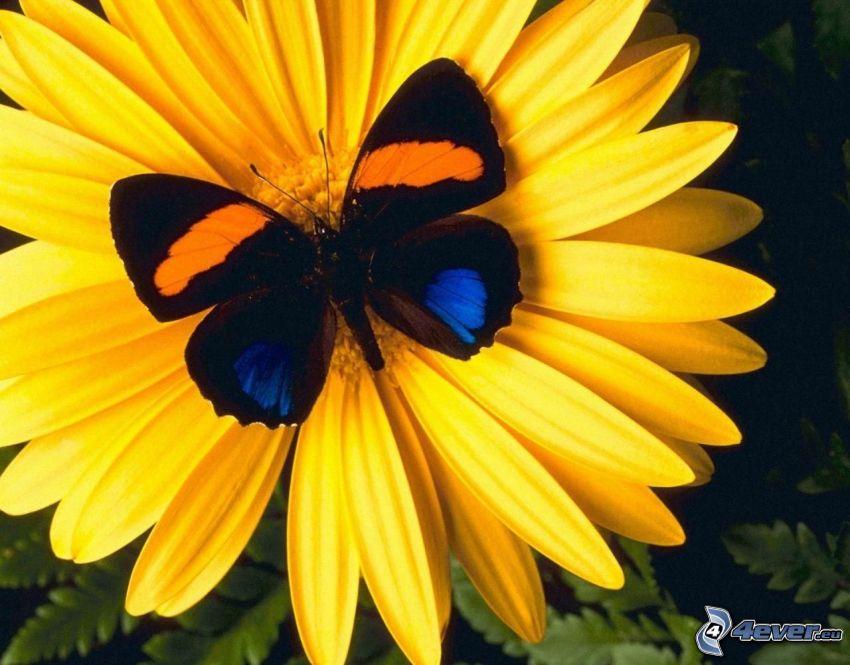 farfalla sul fiore, fiore giallo