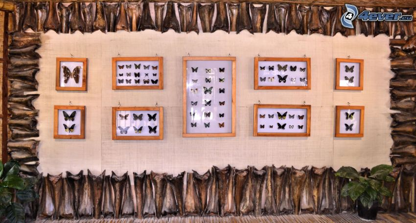 farfalle, mostra