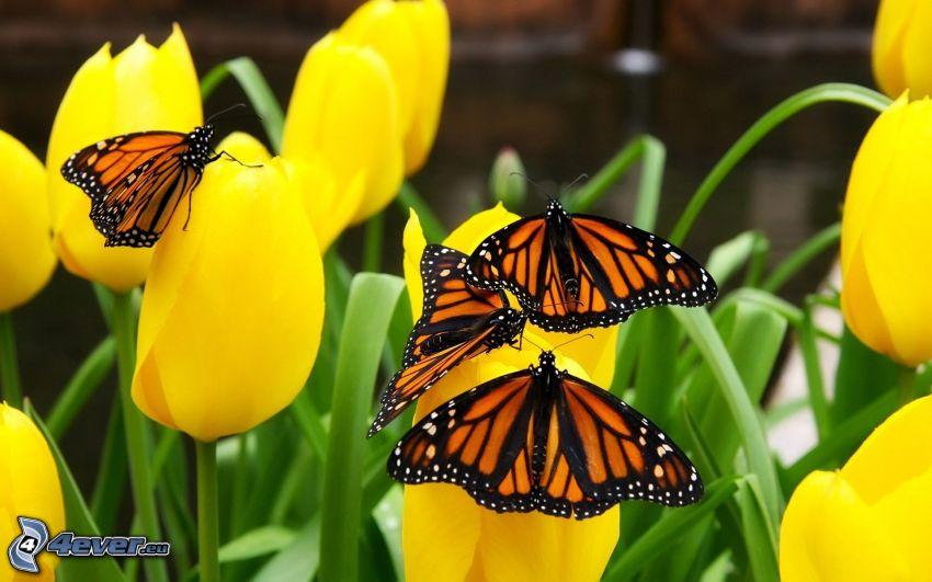 farfalle, tulipani gialli