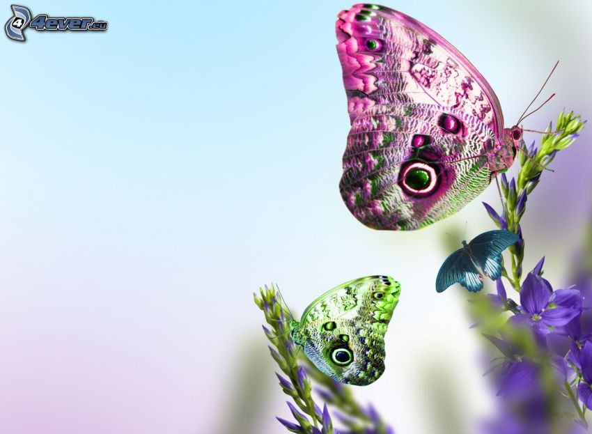 farfalle sui fiori