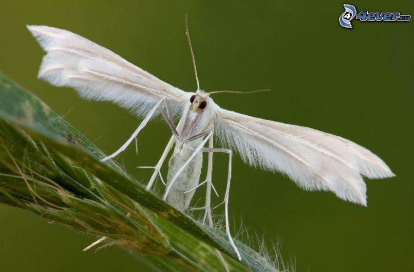 insetto, pianta