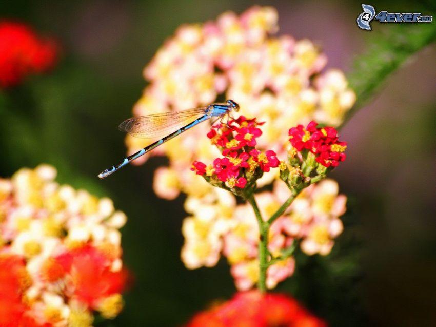 libellula, fiore rosso