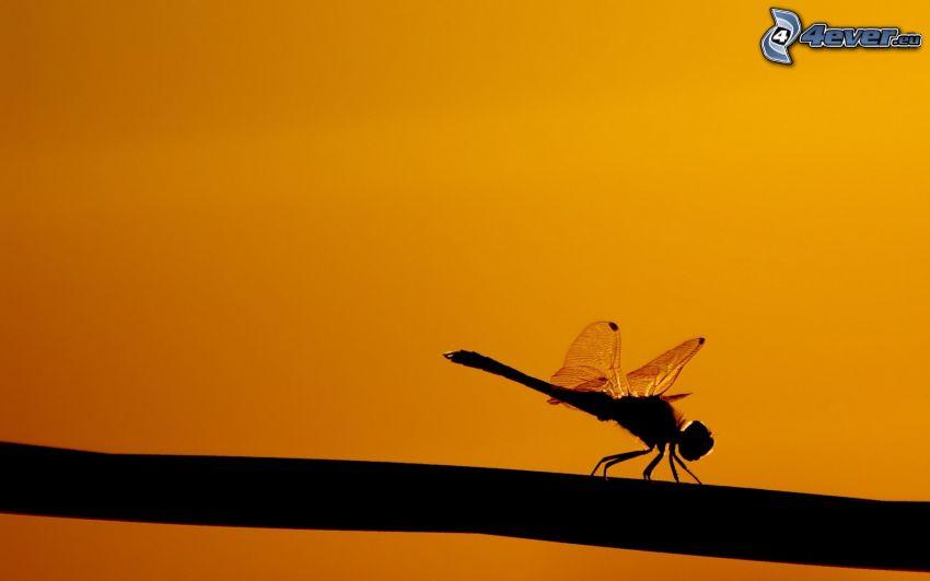 libellula, silhouette