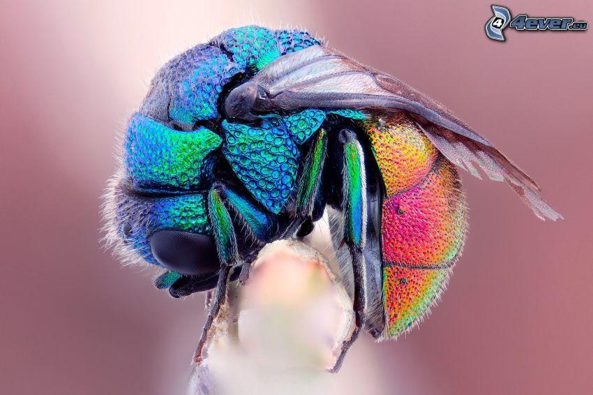 mosca, colori