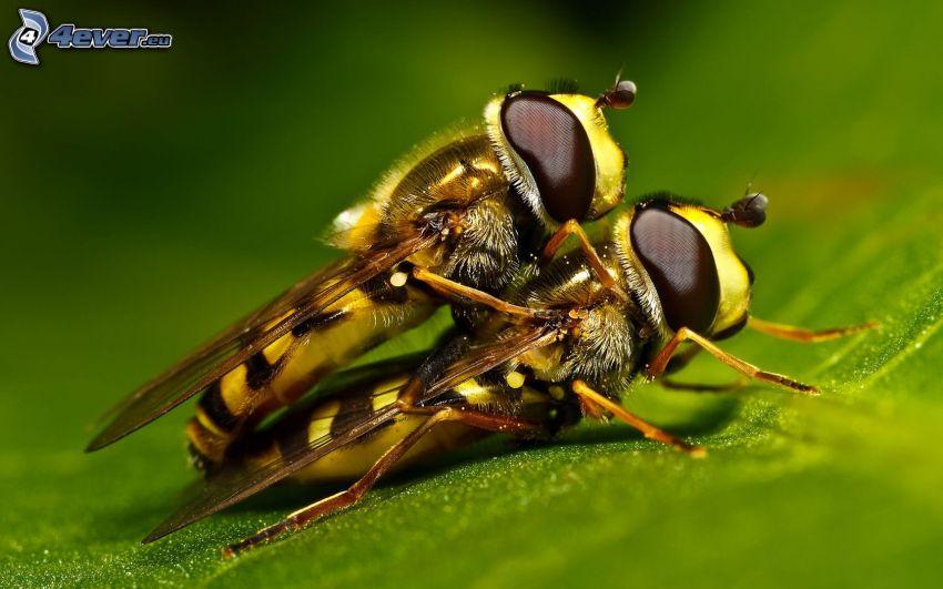 vespa, accoppiamento degli uccelli