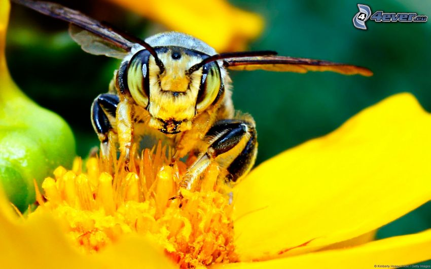 vespa sul fiore