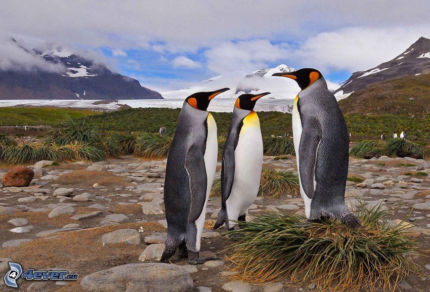 pinguini, montagne