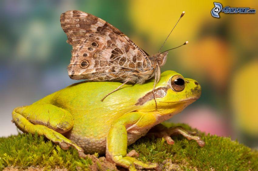rana, farfalla