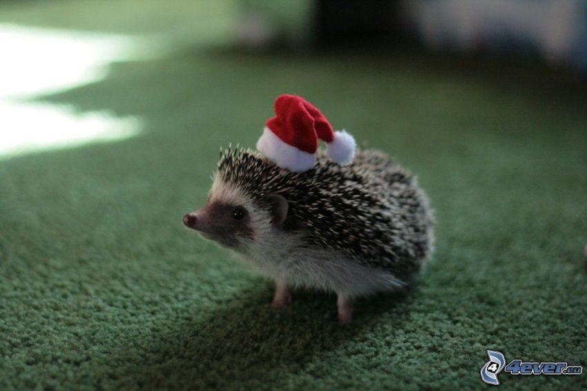 riccio, cappello di babbo natale