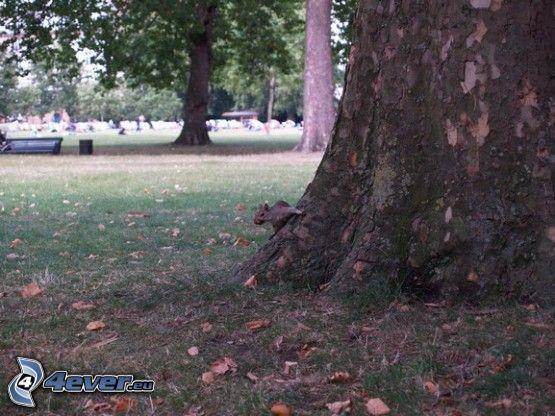 scoiattolo su un albero, parco