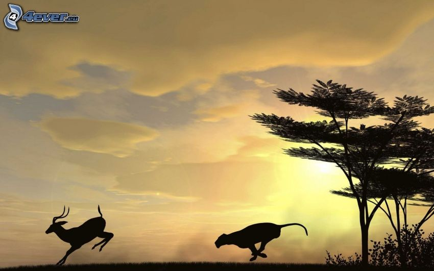 caccia, ghepardo, Antilope, alberi, tramonto