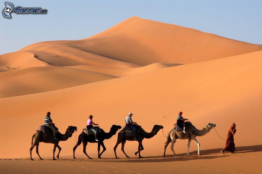 cammelli, turisti, deserto, collina