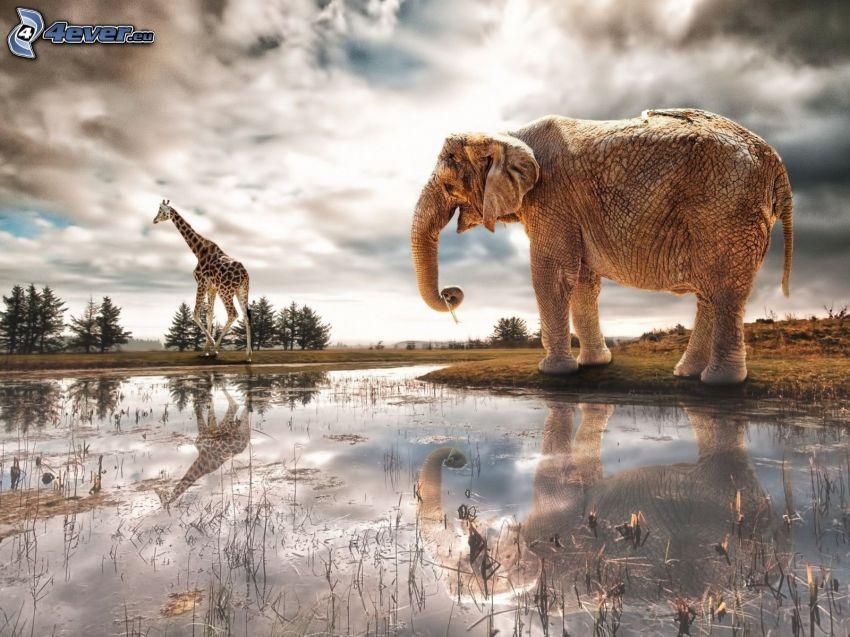 elefante, acqua, giraffa