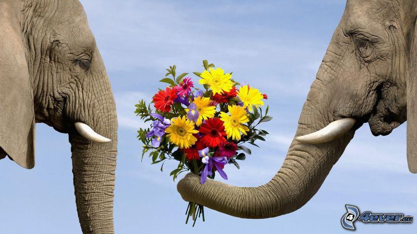 elefanti, proboscide, bouquet