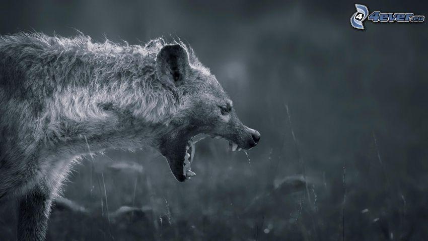 iena, bianco e nero