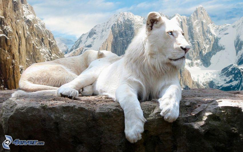 leone, montagne rocciose